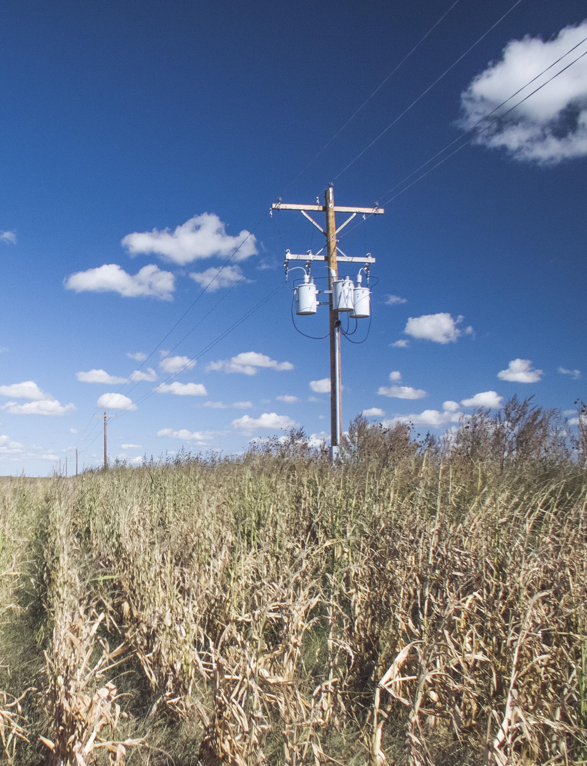 Pic in corn field_web