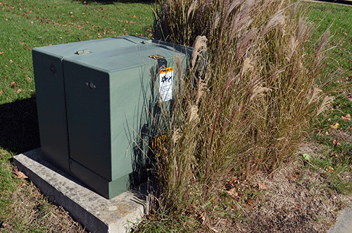 Dawson PPD pad mount transformer box surrounded by ornamental grass to a point that it cannot be safely accessed.