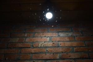 Bugs encircle a light. iStock-509668350