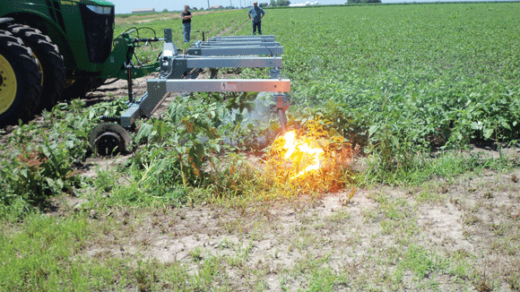 The Weed Zapper sends 14,400 volts of electricity through weeds in a soybean field.